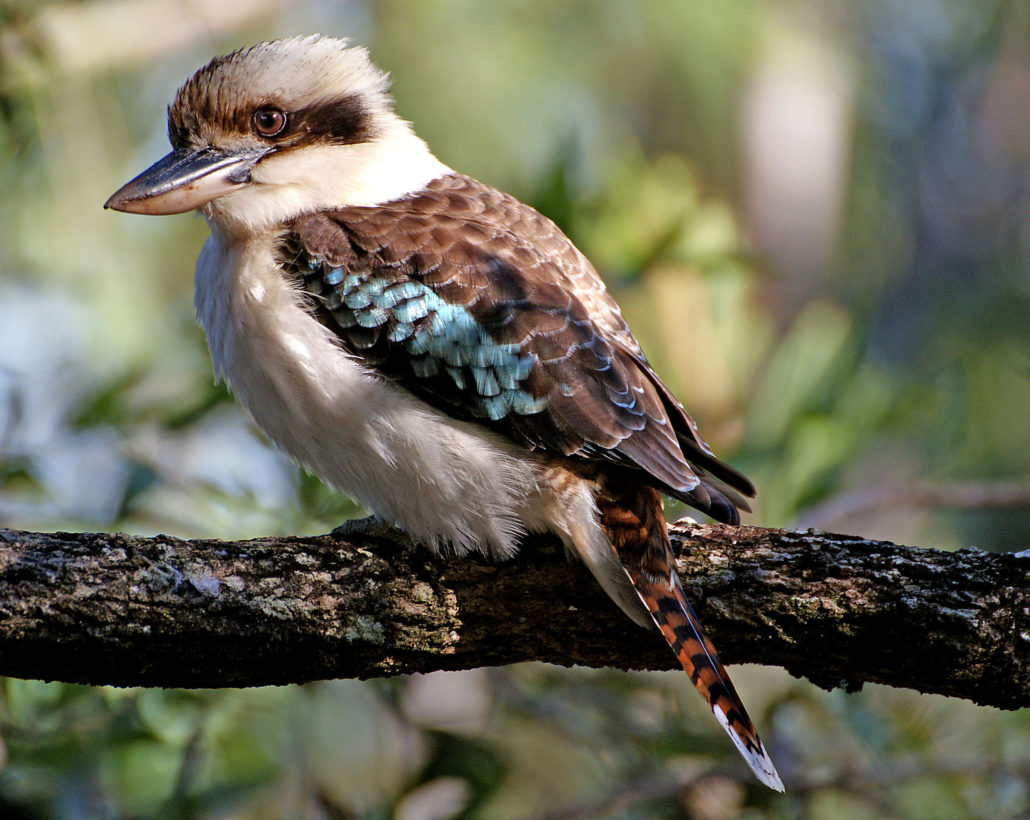 Andare in Australia Natura