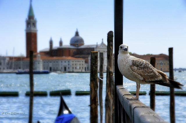 italo sconto venezia