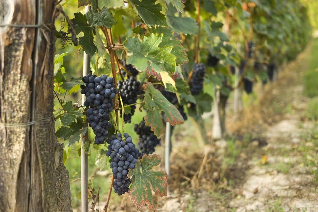 vigna vino andaluso