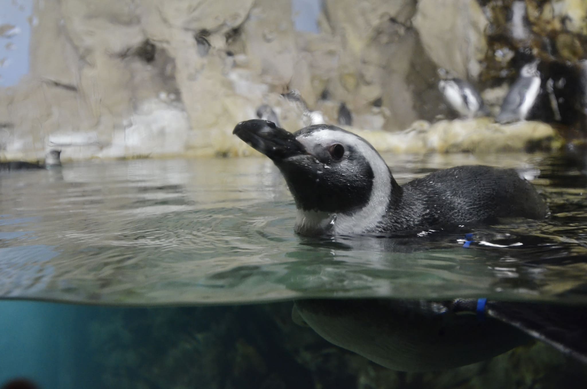 Capodanno acquario di genova