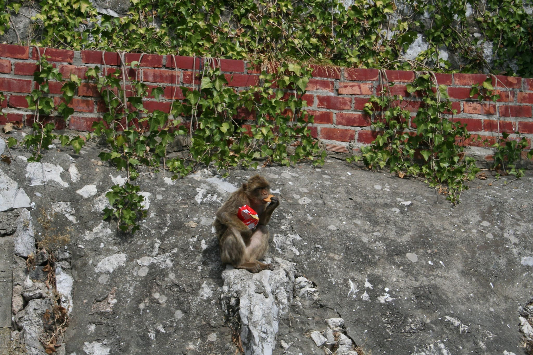 cosa vedere a Gibilterra