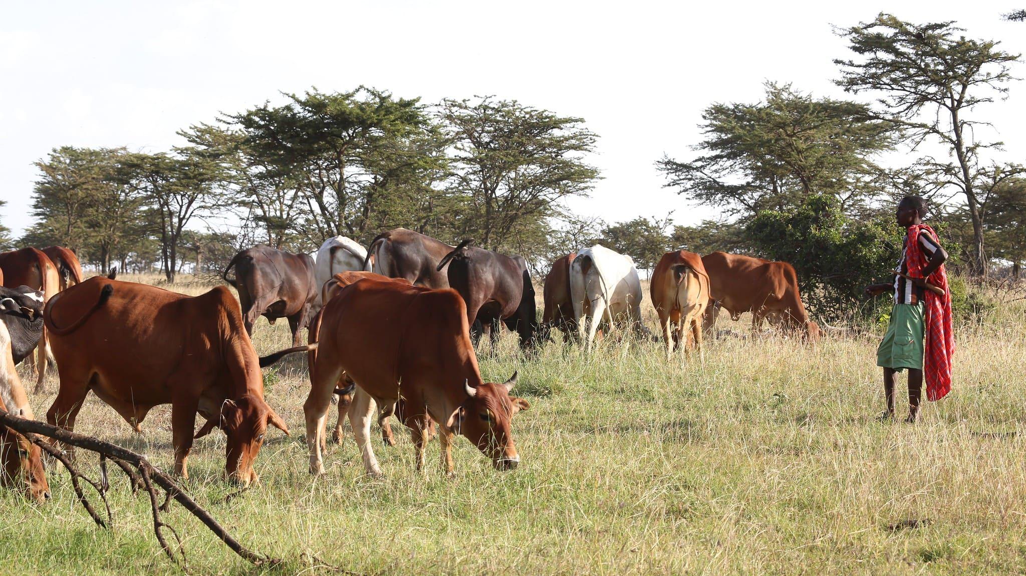 viaggiare in Kenya - Quando andare