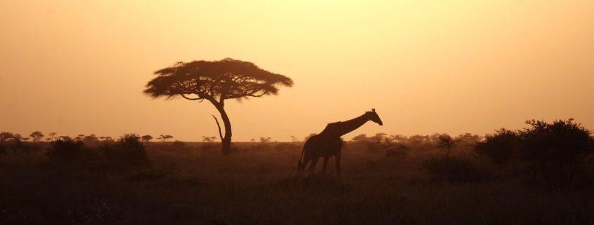 viaggiare in kenya