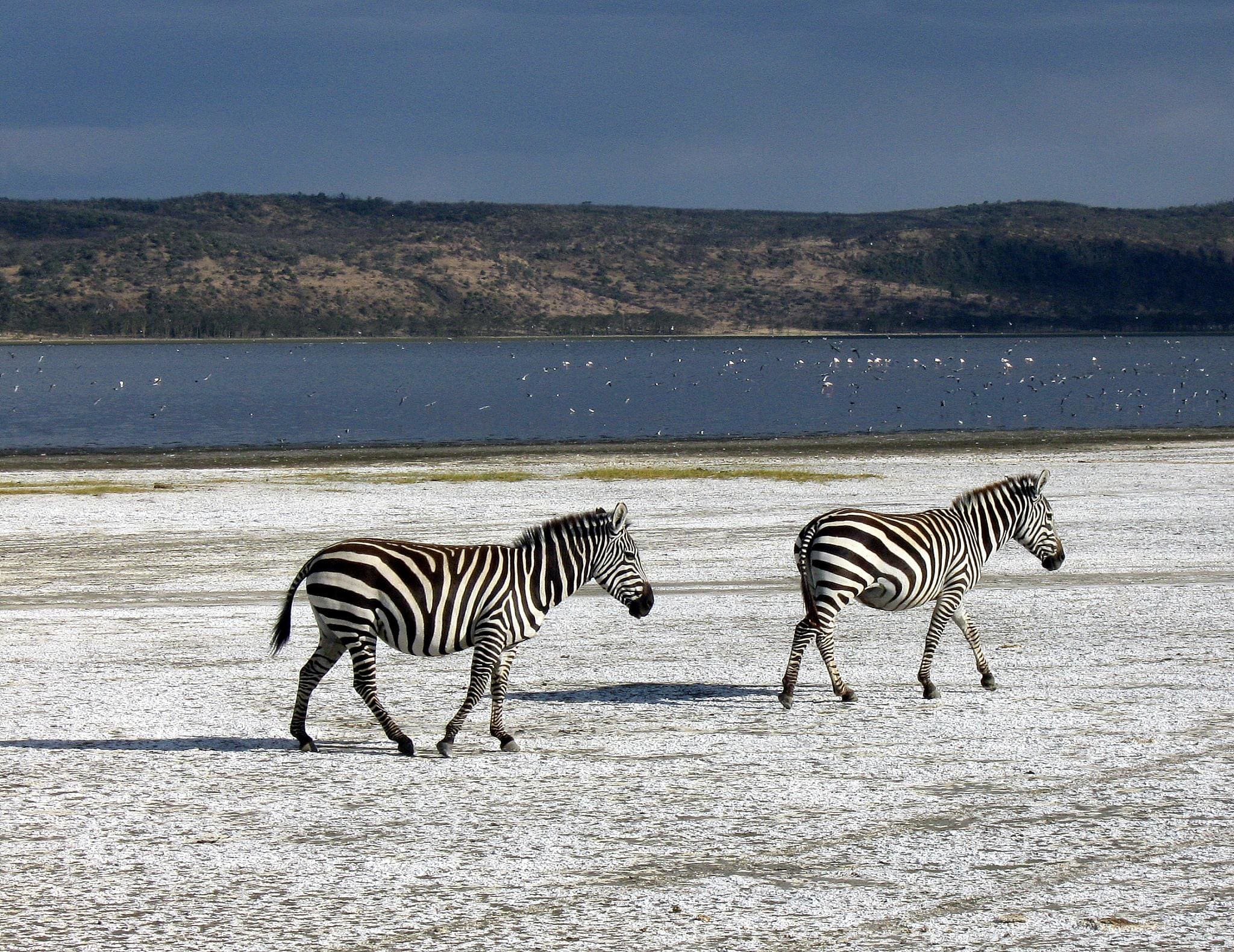 assicurazione viaggio per viaggiare in Kenya