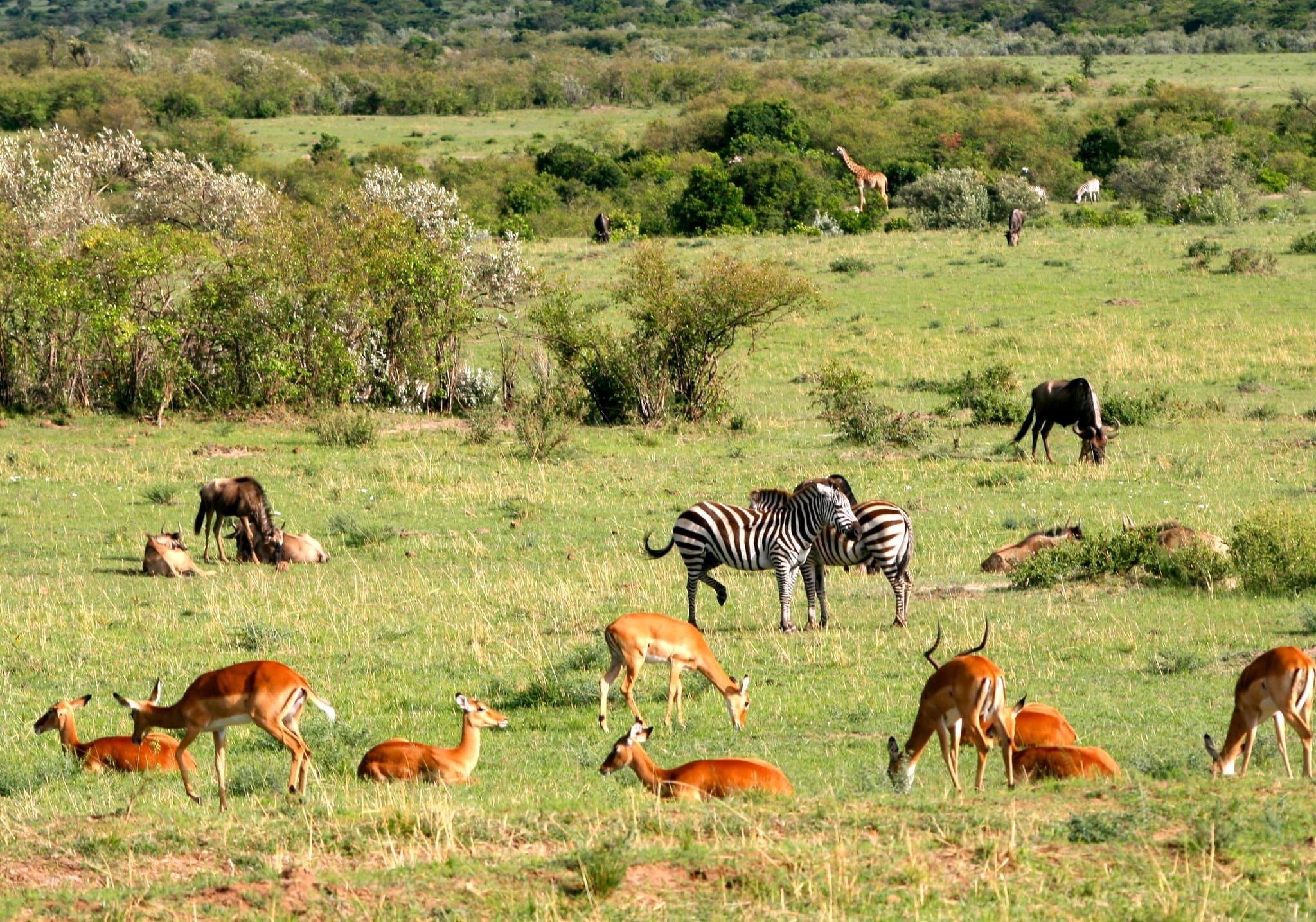 viaggiare sicuri kenya